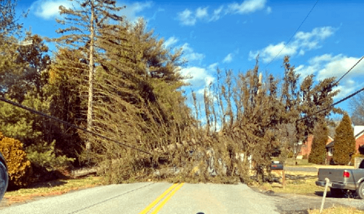 Down Tree, Wiring Thursday Close Kepler Road