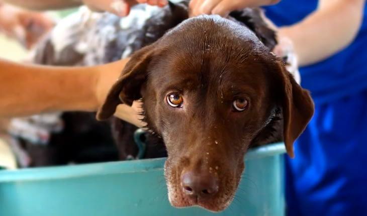 Pet Valu Stores Offer Free Self-Serve Dog Washing