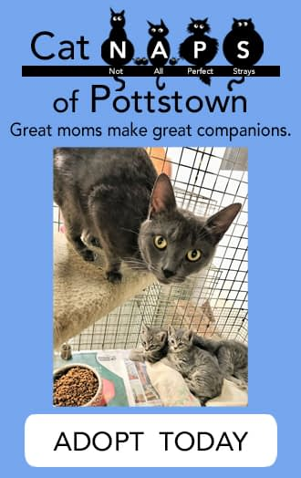 CATNaps of Pottstown Cat Adoptions