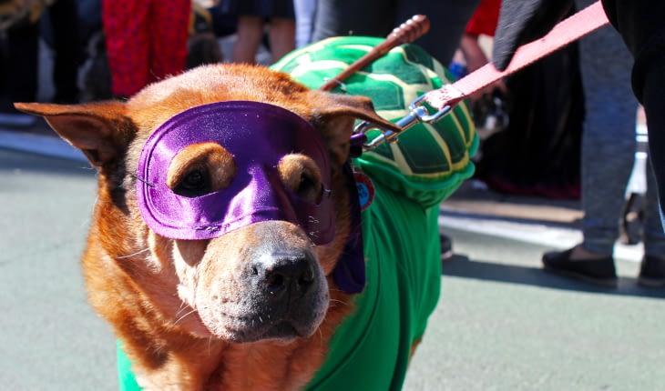 Join Schwenksville Parade, Make its Seniors Smile