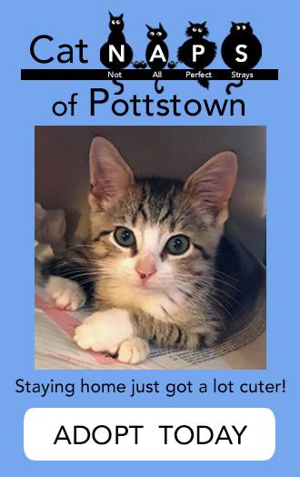 CATNaps of Pottstown Cat Adoptions